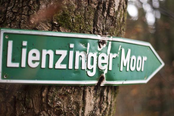 Linzinger_Moos1