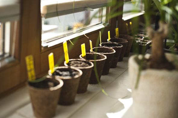 Gartenprojekt5